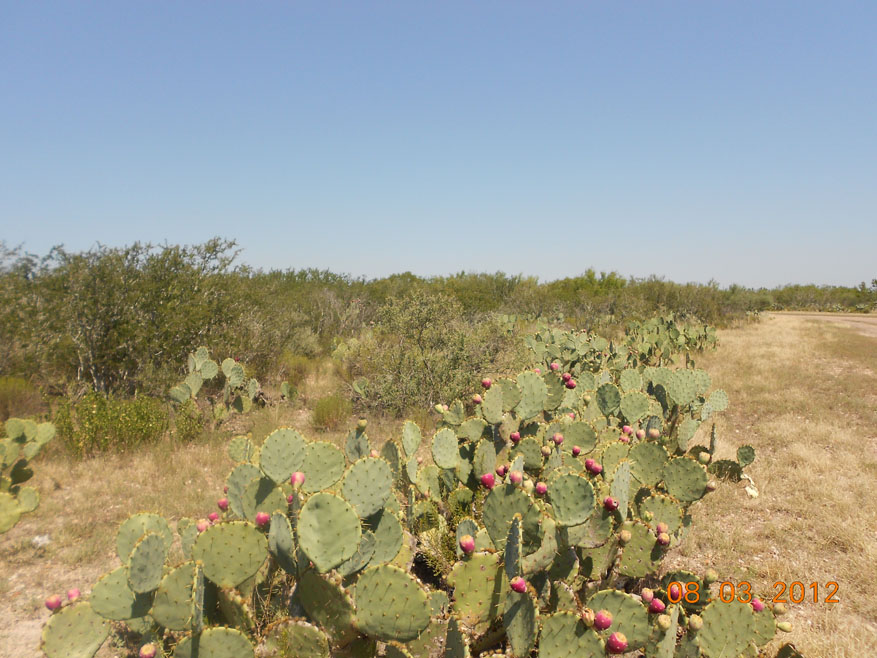5 729 719 Acres The Ultimate South Texas Hunting